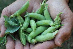 a handful of peas