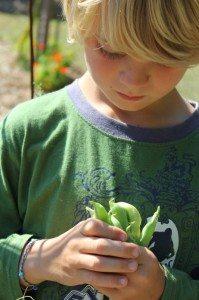 archey's peas