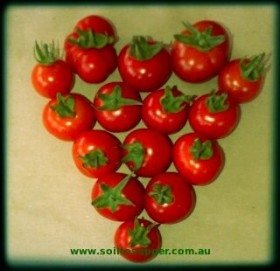 "You Say ""Tomato""and I Say ""Tomato"" …"