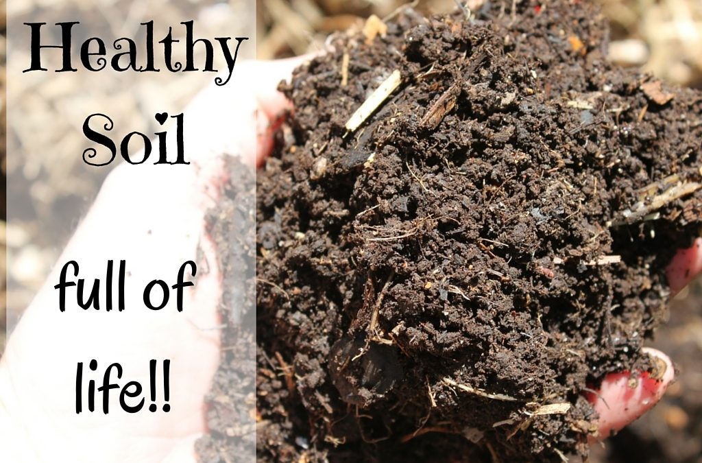 Simple Ways to Fix Dry Garden Soil