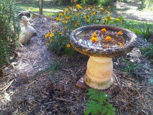 bird bath in garden