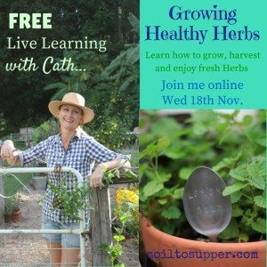 Growing Healthy Herbs