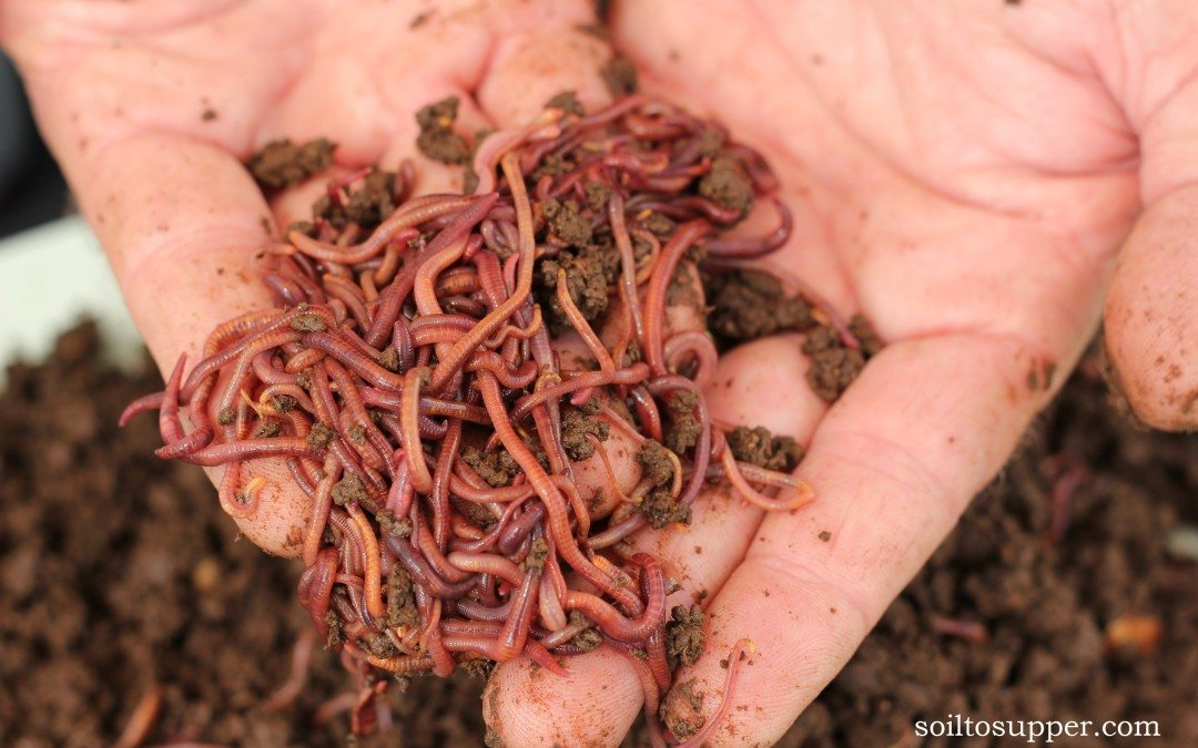 What's the difference between Composting and Worms Farms?