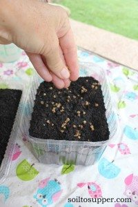 sprinkle seeds