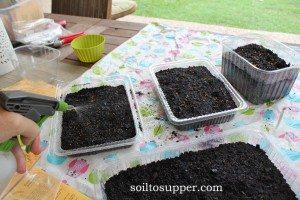 spraying seeds
