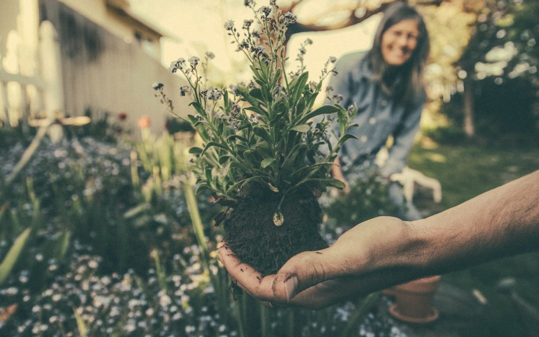How to Promote your Gardening Business, Program or Community Organisation