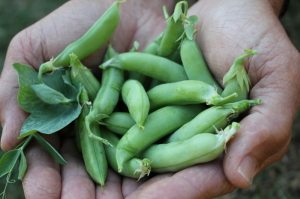 a handful of peas