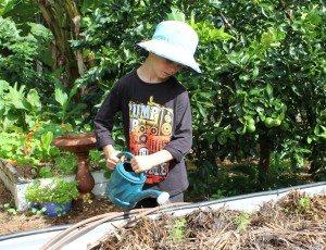 watering_seedlings1