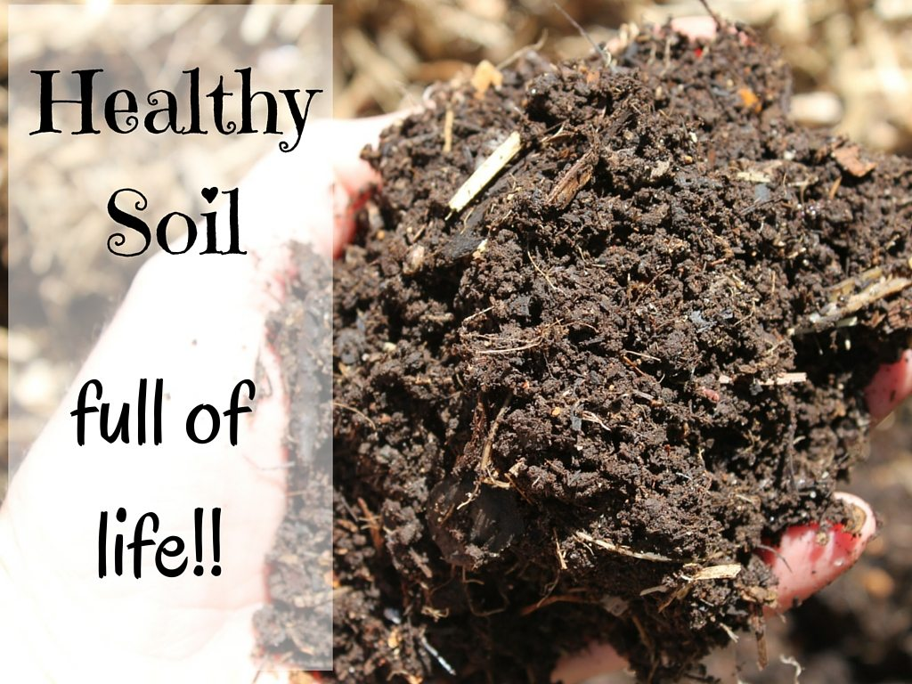 Simple Ways to Fix Dry Garden Soil