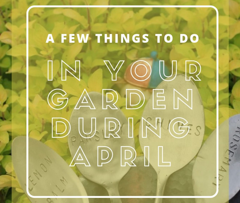 A few things to do in your Garden during April