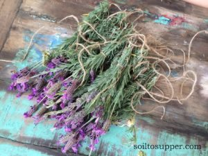 bunches of fresh lavender