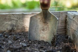 garden-1176406_1920