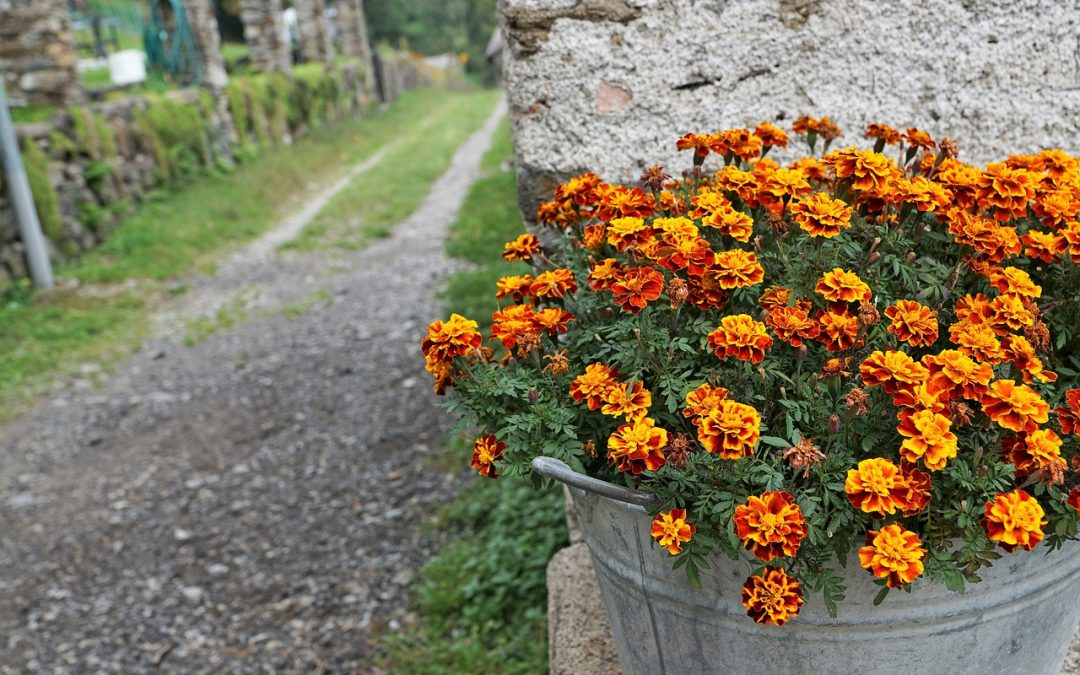 How to Grow Companion Plants in Your Garden
