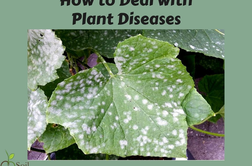 How to Deal with Plant Diseases
