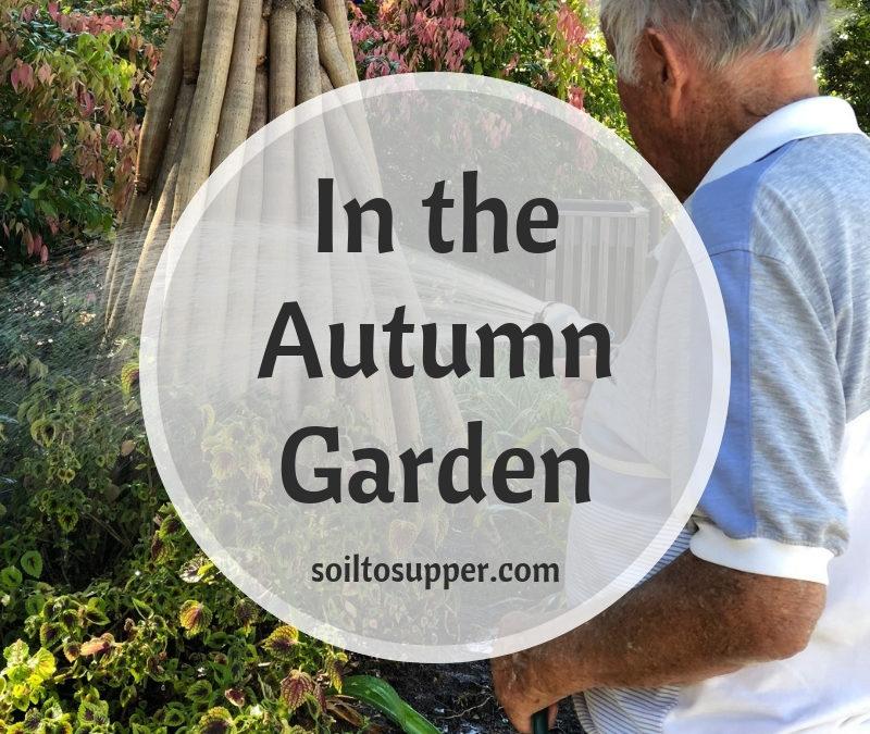 In the Autumn Garden