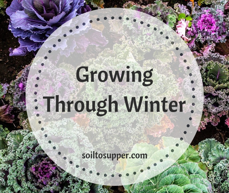 Growing through Winter