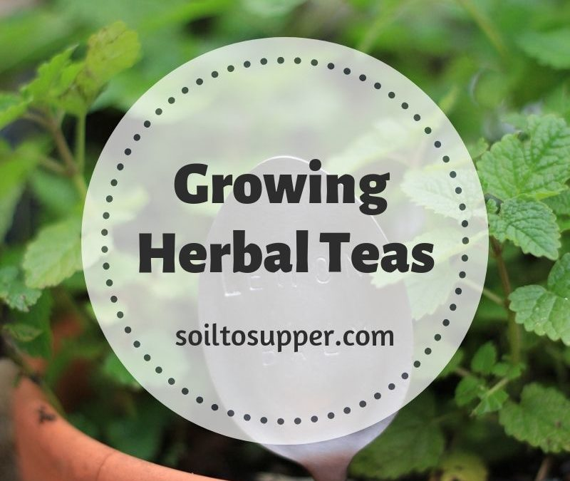 Growing Herbal Teas