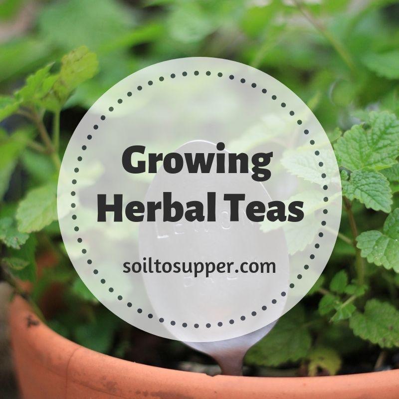 Growing Herbal Teas