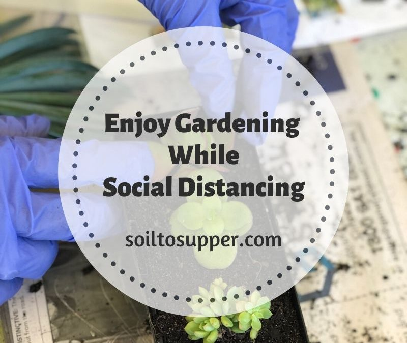 Enjoy Gardening While Social Distancing